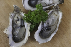 ngg_1_IMG_Oysters0135-scaled