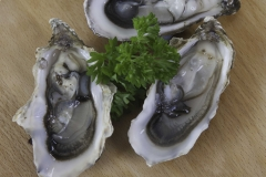IMG_Oysters0135